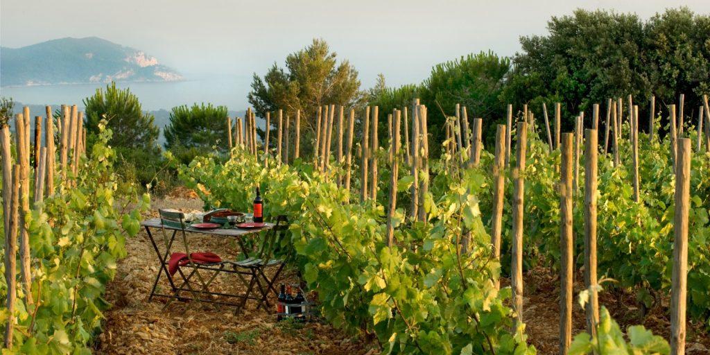 Visitez le Domaine de la Begude Vin de Bandol & Huile d'Olives